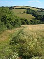 Twiscombe - geograph.org.uk - 200353.jpg