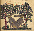 Two hares eating berries - Kitab Na't al-hayawan wa-manafi'ihi (Animals and their Uses) (13th C), f.166v - BL Or. 2784.jpg