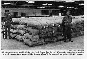 Hemp in Kentucky - Soldiers in a Kentucky warehouse guarding seed for the 1943 hemp crop