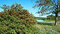 Usmansky District, Lipetsk Oblast, Russia - panoramio (1).jpg