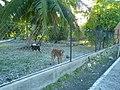 Vaimate - Rangiroa - panoramio (8).jpg