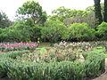 Vergelegen Rose Garden 1.JPG