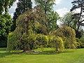 Versailles (33759153944).jpg