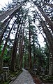 Vertical Panorama - Choishi Path - Okunoin Cemetery - Koyasan - Japan - 02 (47949842108).jpg