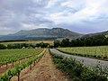 Vignoble de Groot Constantia Afrique du Sud.jpg