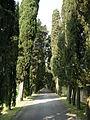 Villa il cupolino, viale d'accesso.JPG