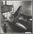 Visserij Walvisvangst, Bestanddeelnr 036-0150.jpg