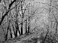 W STARYM STYLU igiełki malowane mrozem 03 - panoramio.jpg