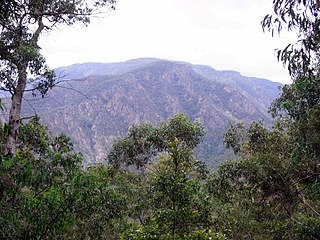 Wadbilliga National Park Protected area in New South Wales, Australia