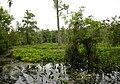 Wakulla-springs 2009-05-04T19 43 49.jpg