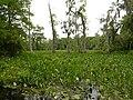 Wakulla-springs 2009-05-04T19 44 21.jpg