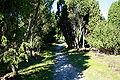 Walsrode - Tietlinger Wacholderhain 05 ies.jpg