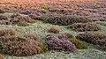Wandelen over de Planken Wambuis vanuit Mossel 050.jpg
