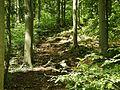 Wanderweg auf der Schwäbischen Alb - panoramio.jpg