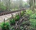 Whitwell Station - spring flowers - geograph.org.uk - 1255588.jpg