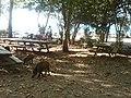 Wild Hogs - panoramio.jpg