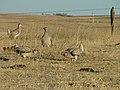 Wildlife89 (38367112984).jpg