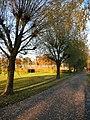 Willows - panoramio (1).jpg