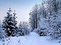 Winter im Teutoburger Wald12.jpg