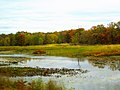 Wisconsin River Marsh - panoramio.jpg