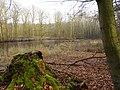 Wolbecker Tiergarten (6).JPG