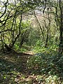 Woodland path above Bonsall - geograph.org.uk - 272373.jpg