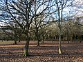 Woodlands north of Monken Hadley Common bridle path 07.jpg