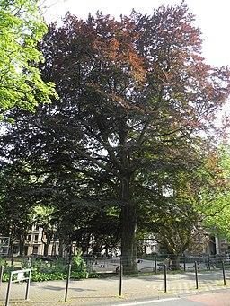 Carnapsplatz in Wuppertal