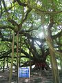 Yangshuo 01.jpg