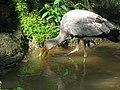 Yellow billed stork (7856541580).jpg