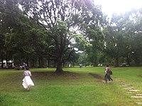Yumenoshima park koto tokyo summer 2014.jpg