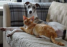 A dog and a cat sit on a sofa