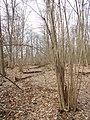 Zolotonis'kyi district, Cherkas'ka oblast, Ukraine - panoramio (512).jpg