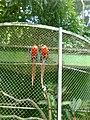 Zoo Dois Irmãos by SandraSB (12).jpg