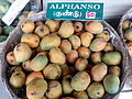 """Aesthetic Alphonso Mango"".jpg"