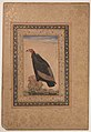 """Red-Headed Vulture"", Folio from the Shah Jahan Album MET sf55-121-10-25a.jpg"