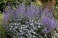 'Eryngium' Sea Holly Blue Thistle - Sundial Garden - Hatfield House - Hertfordshire England.jpg