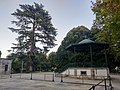 Árvore isolada em Jardim Público.jpg