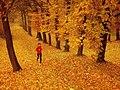 Žltý park - panoramio.jpg