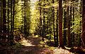 Весняний буковий ліс.jpg