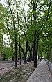 Володимирська гірка IMG 5638.jpg
