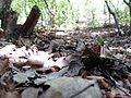 В горном лесу - panoramio.jpg