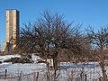 Дерево культурної груші на Катеринівці, взимку - 01.jpg