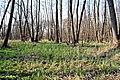 Заплавний ліс по річці Чорний Жеребець.jpg