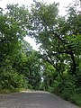 Звездарска шума, Споменик природе, Београд, 033.jpg
