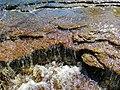 Каньон реки Лава 02.jpg