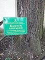 Каштан кінський (Одеса, вул. Гаванна, 4) Травень. 2018 рік. 03.jpg