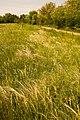 Коваль на фоне тропинки в Ботаническом саду ЮФУ г. Ростов-на-Дону.jpg
