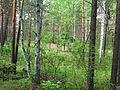 Природа - panoramio - Божьев С.В..jpg