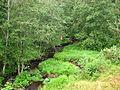 Речка - panoramio (1).jpg